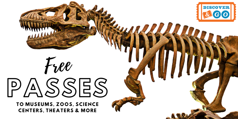 A large dinosaur skeleton