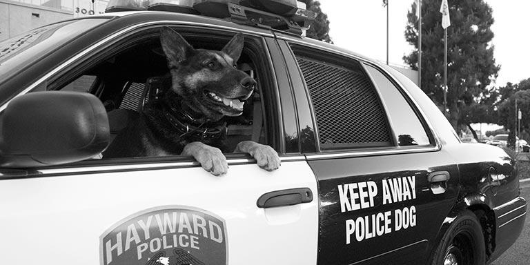 Keep Away Police Dogs